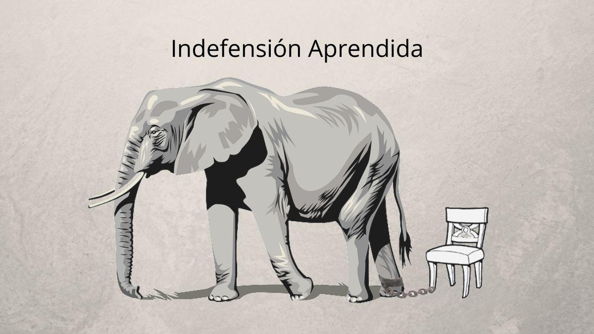 elefante atado a una silla por indefensión aprendida