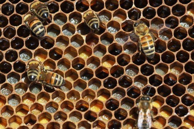 panal de abeja - tripofobia
